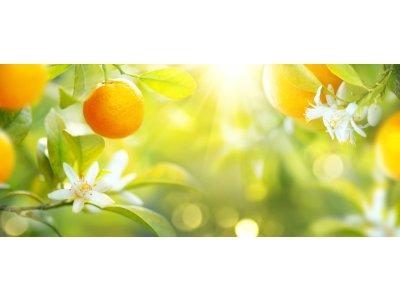 Náplň do osvěžovače POD, SOLO, DUAL - Citrusové plody