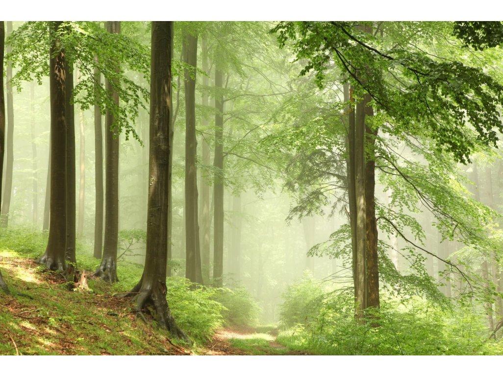 Náplň do osvěžovače POD, SOLO, DUAL - Vůně lesa
